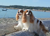 Cavaliers of Puget Sound