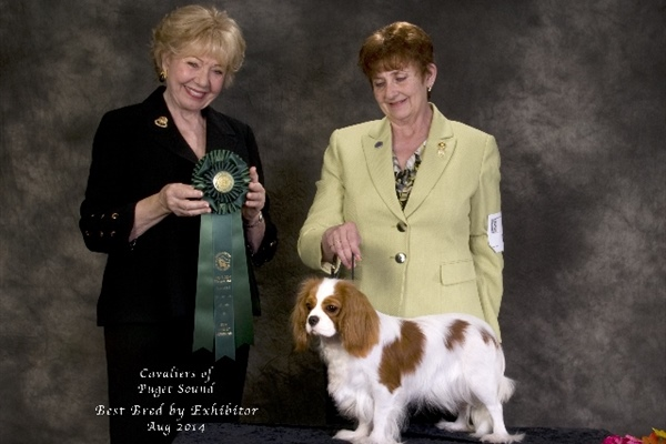 Best Bred By Exhibitor-Stang-Olive