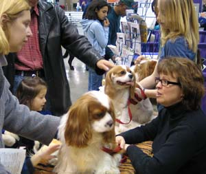 Cavaliers of Puget Sound Breed Booth